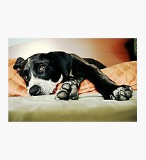 Relaxing Dog Photographic Print