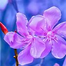 Beautiful flower by Charuhas  Images