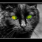 Black Cat by RicksPix