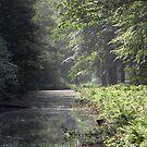 Morninglight in the forest by ienemien
