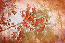 Red Leaves and Gum Trees by Elaine Teague