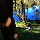 Paradise in The Shire, Sydney.  by ronsphotos