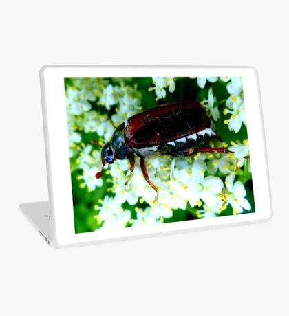 May Beetle on Elderflower Laptop Skin