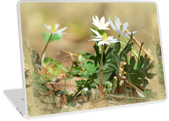Its Spring! by Jean Gregory  Evans
