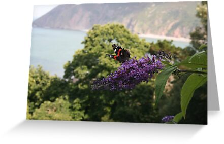 Red admiral on rose bay willow herb, backdrop of Exmoor coastline. by Grace Johnson