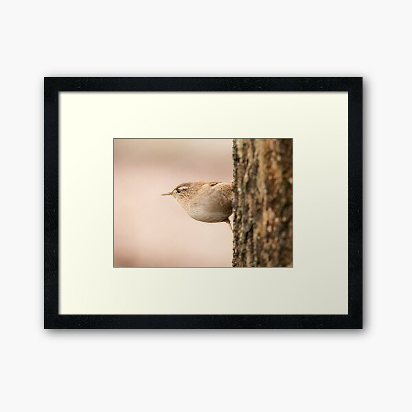 Wren at attention Framed Art Print
