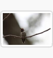 The best of the newest hummingbirds 9-16-2015 Sticker