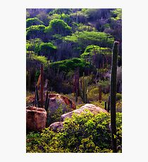 The Desert After Rain Photographic Print