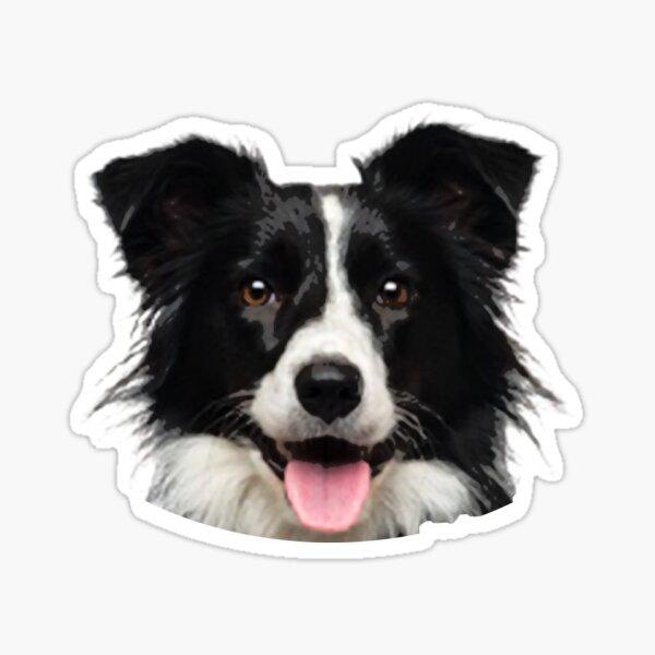 funny border collie face portrait cute border collie Sticker