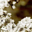 Summer Rose  by Janice E. Sheen