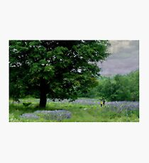 A Childs Walk Among Lupine Photographic Print