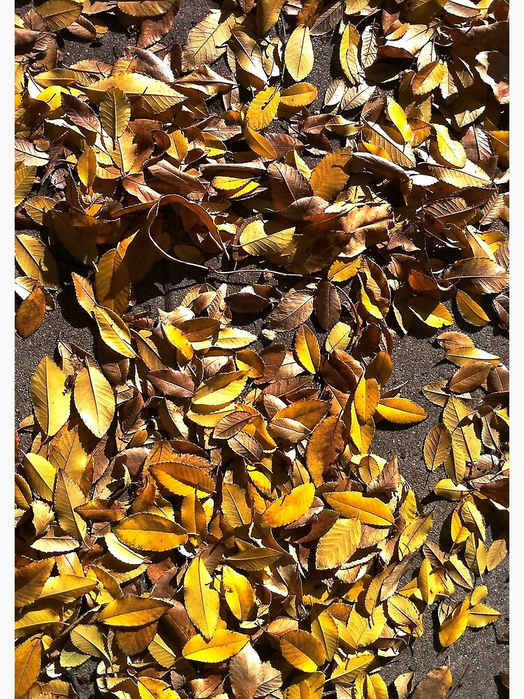 Elm leaves in Autumn by douglasewelch