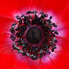 Inside A Bloom by Christian Eccleston