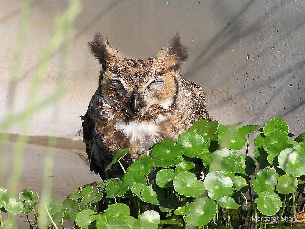 Sleeping owl by Margaret Shark