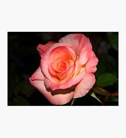 Joyful rose Photographic Print