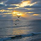 Into the Setting Sun by Barbara  Brown