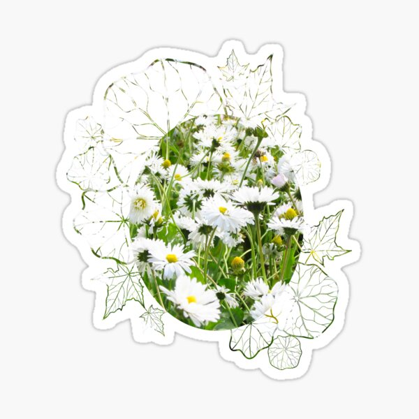 Spring Is Coming. Daisy Attractive Flower. April Showers Bring May Flowers  Sticker