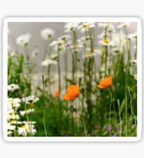 Field poppy  Sticker