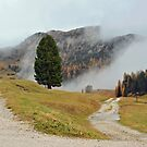 Plaetzwiese - SudTirol - Italy by Arie Koene