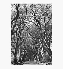 Oak Photographic Print