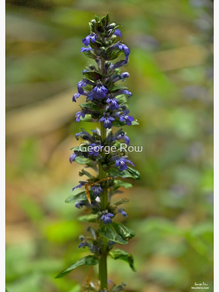 Bugleherb - Burntollet Woods by VeryIreland