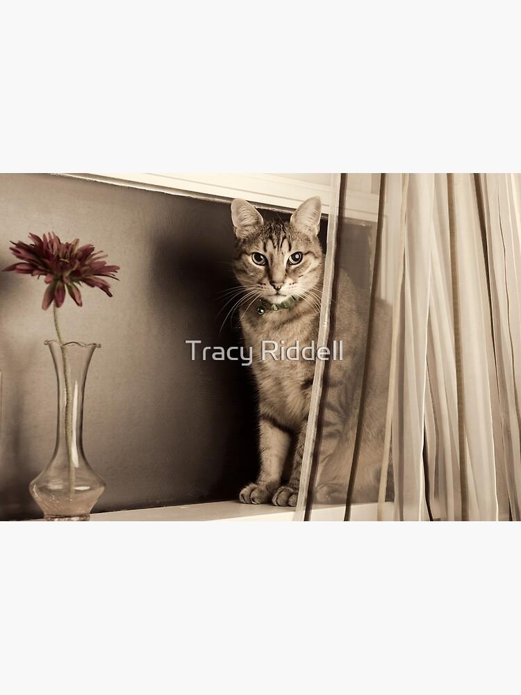 Curtain Call by taos