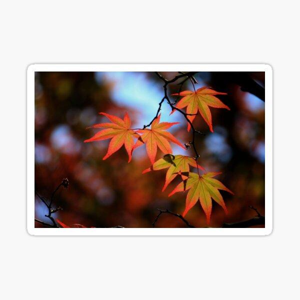 Leaf dance Sticker
