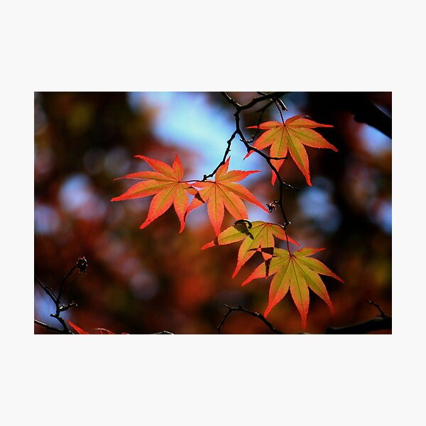 Leaf dance Photographic Print