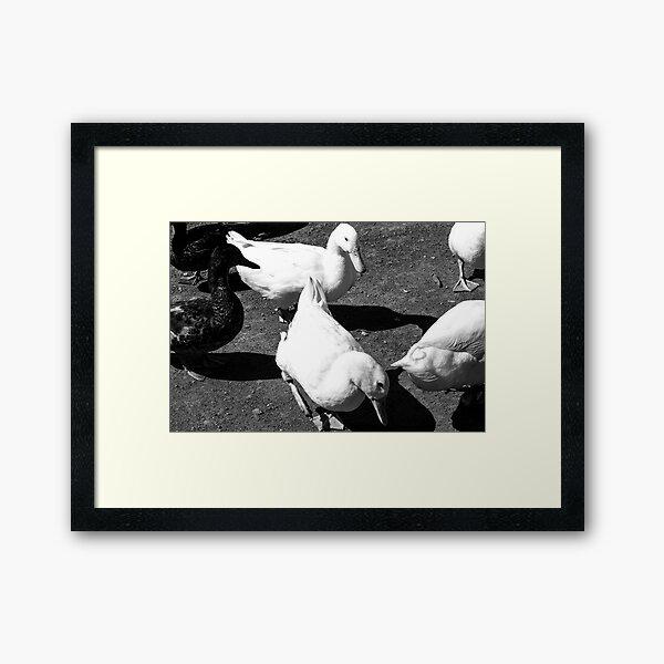 the ducks Framed Art Print