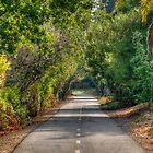 Folsom Trail by Diego Re