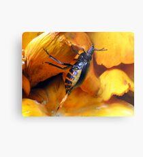 Beetle With Ovipositor Metal Print