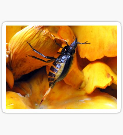 Beetle With Ovipositor Sticker