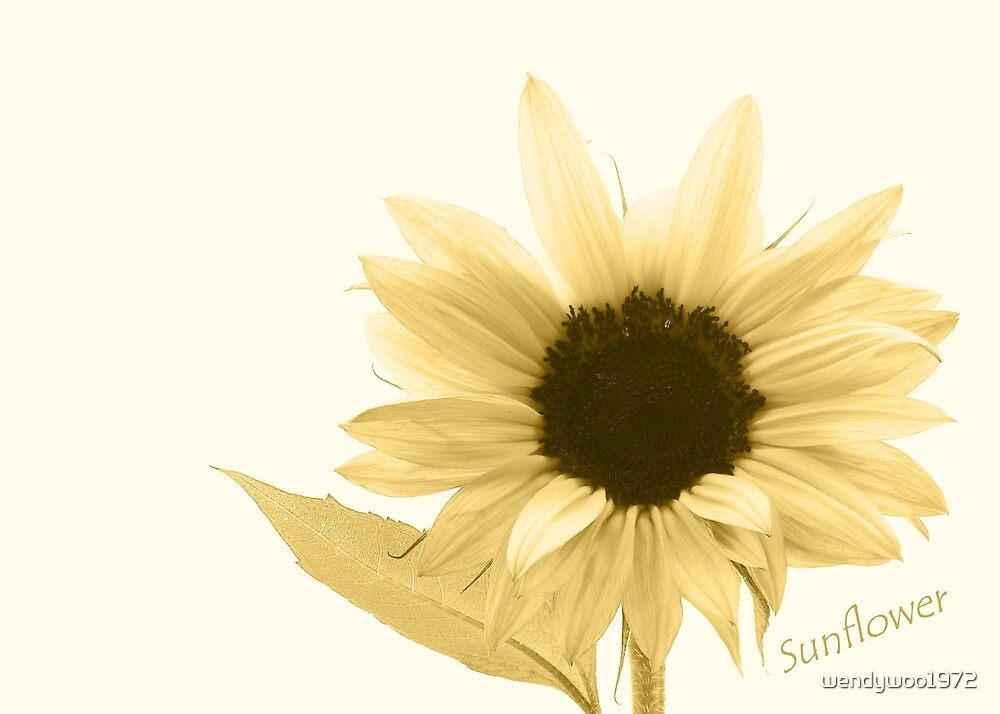 Sunflower 1 by wendywoo1972