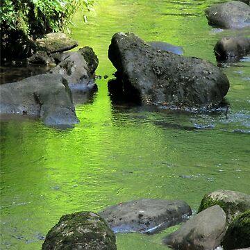 Old Rock's Sluggish Swim by jgevans