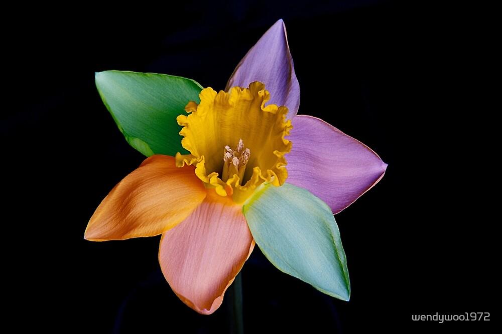 Colourful daffodil by wendywoo1972