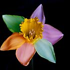 Colourful daffodil by wendywoo1972