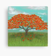 Flamboyan Tree Canvas Prints Redbubble