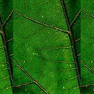 Leaf it Alone by RicksPix