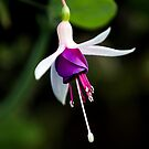 the colour purple by wendywoo1972