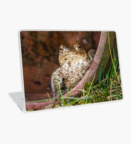 Common Toad Laptop Skin