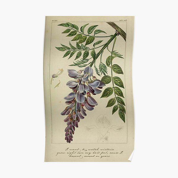 the lakes wisteria Poster
