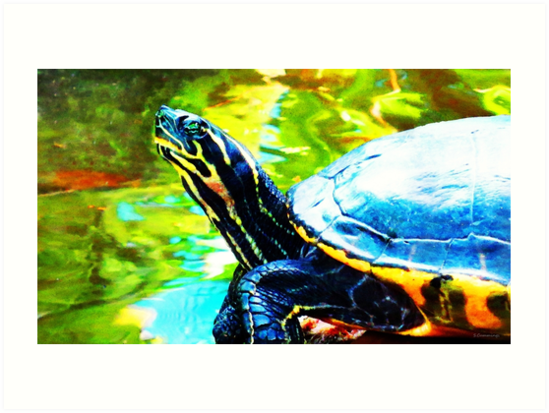 Colorful Turtle by Sharon Cummings by Sharon Cummings