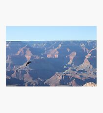 Grand Canyon Bird Photographic Print