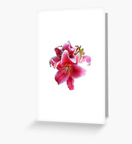Cluster of Stargazer Lilies Greeting Card