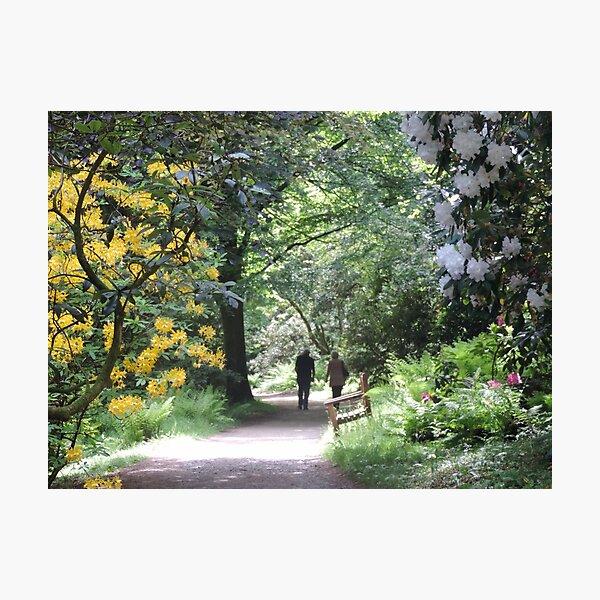 Springtime at Stourhead Photographic Print