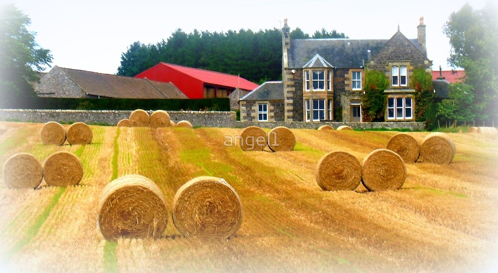 Dougals & Farm by ©The Creative  Minds