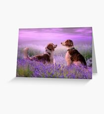 Welshies in the lavender field...... Greeting Card