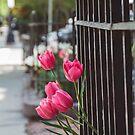 Beacon Street Tulips by Bethany Helzer