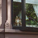 Back Bay Feline by Bethany Helzer