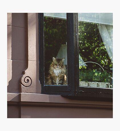 Back Bay Feline Photographic Print
